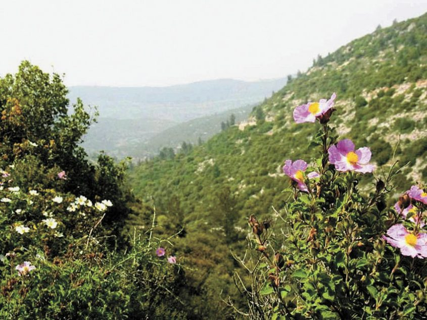 נחל קטלב (צילום אסתר ענבר)
