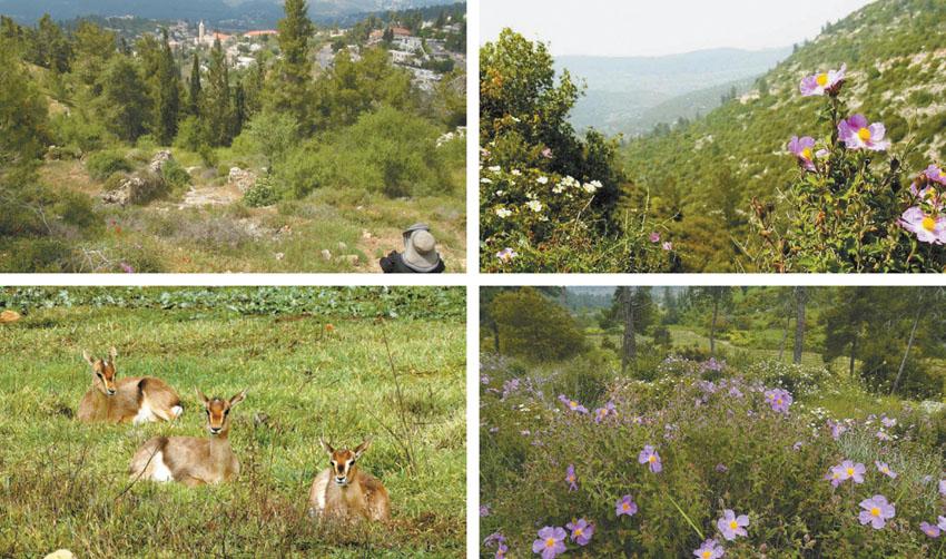 (צילומים: אסתר ענבר, רון חביליו, אורן יבנין, דב גרינבלט, החברה להגנת הטבע)