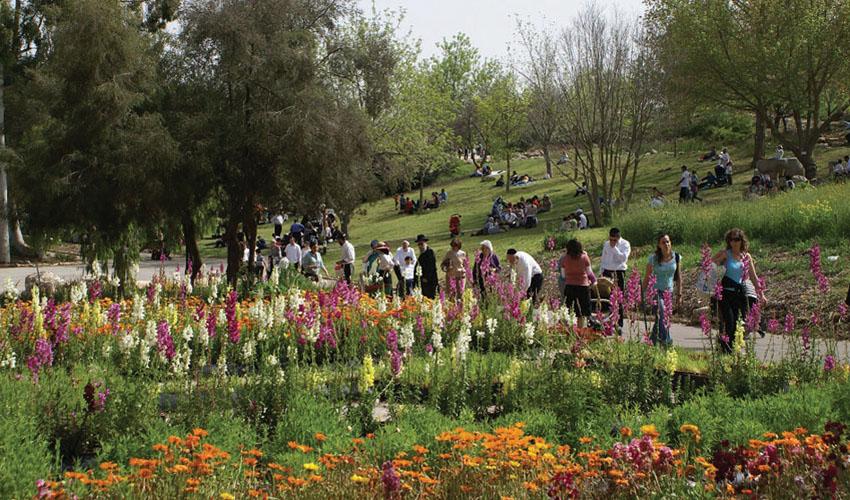 פסח בגן הבוטני (צילום: ג'ודית מרכוס)