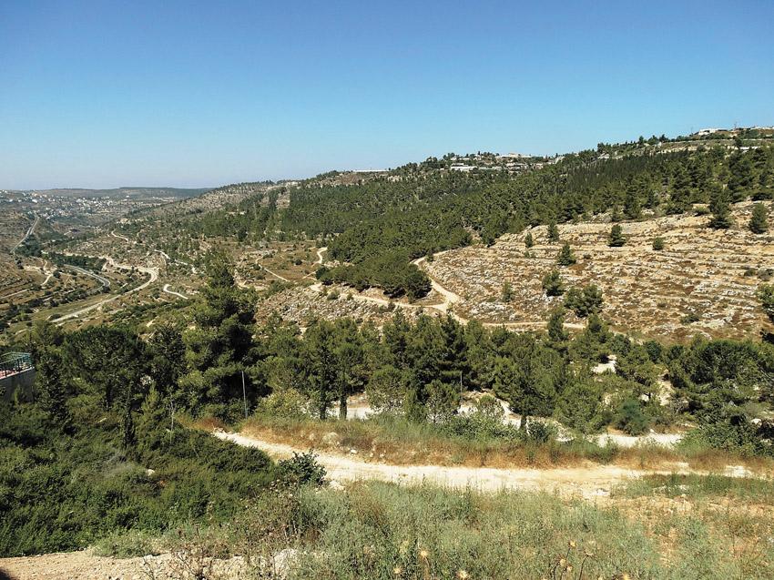 רכס לבן (צילום: דב גרינבלט, החברה להגנת הטבע)