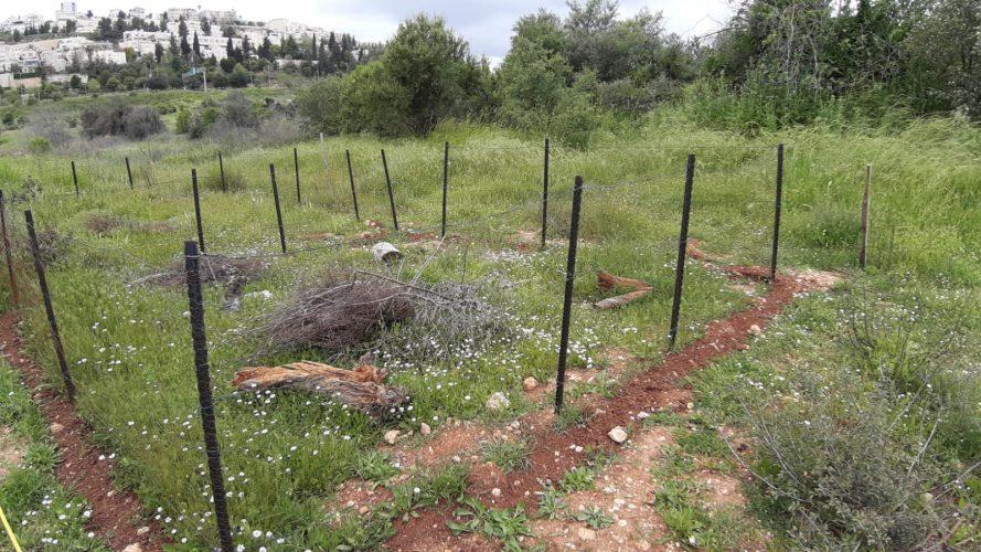 צבים בעמק הצבאים (צילום: דב גרינבלט, החברה להגנת הטבע)