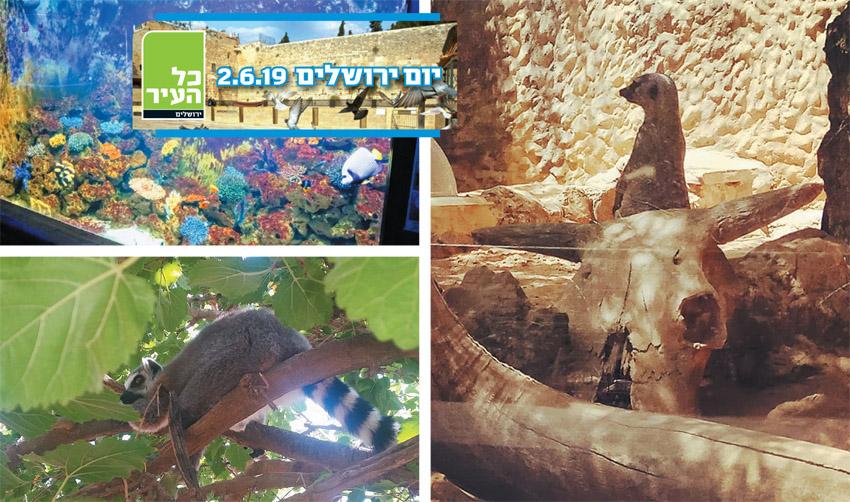 """גן החיות התנ""""כי (צילומים: מיכל פישמן-רואה)"""