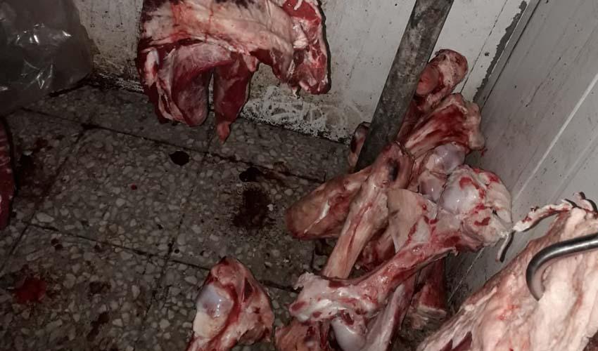 """חלק מהבשר שנתפס באטליז """"מרכז גושה לבשר"""", ברחוב בית חנינה 90, ירושלים (צילום: דוברות משרד הבריאות)"""