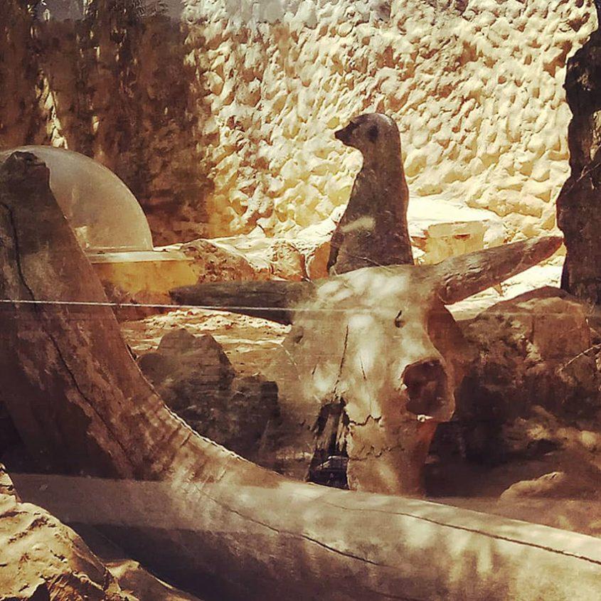 גן החיות התנכי (צילום: מיכל פישמן-רואה)