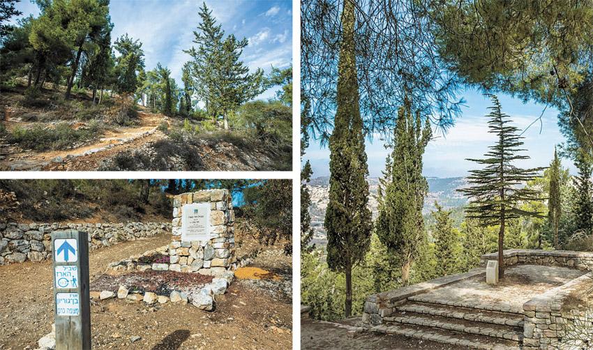 """שביל הארז ביער ירושלים (צילומים: באדיבות ארכיון הצילומים של קק""""ל)"""