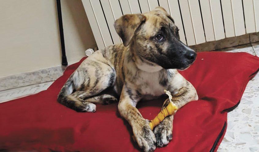 פיבי - הכלבה של משפחת ברעם (צילום: פרטי)