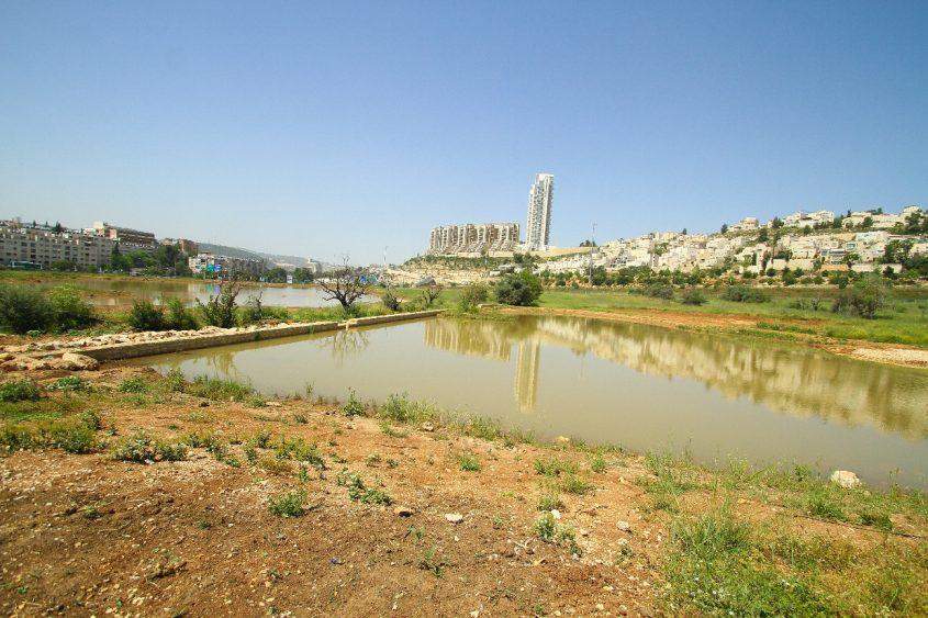 פארק הצבאים בירושלים (צילום: ארנון בוסאני)