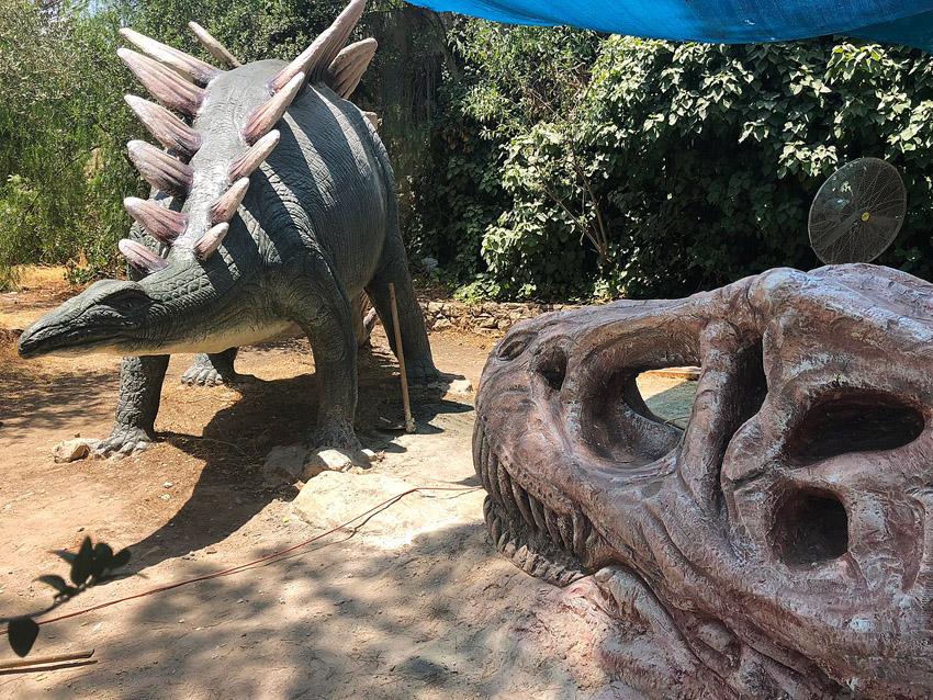 פינת החי במוזיאון הטבע (צילום: מוזיאון הטבע)