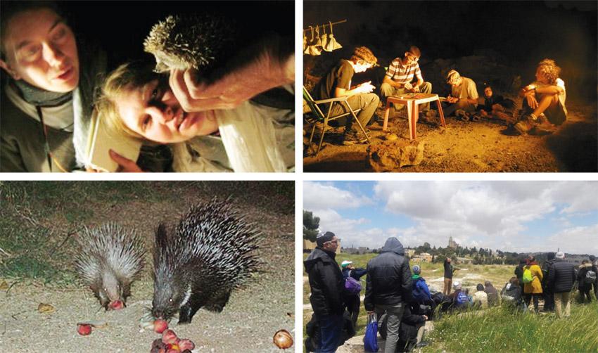 התחנה לחקר ציפורים, טיבוע לילה, גבעת התנך, התחנה לחקר ציפורים, דרבנים אוכלים במסתור, סיורי לילה (צילומים: מיכאלה צינקין, עמיר בלבן, דוד רודמן, באדיבות התחנה)