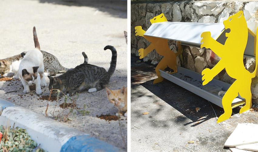 מתקני האכלת חתולי רחוב בנוה יעקב, חתולי רחוב (צילומים: מצלמות אבטחה השומרים נוה יעקב, אליהו הרשקוביץ)