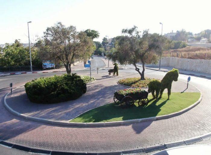 פרחי סתיו בירושלים (צילום: אלטרנטיבה 1)
