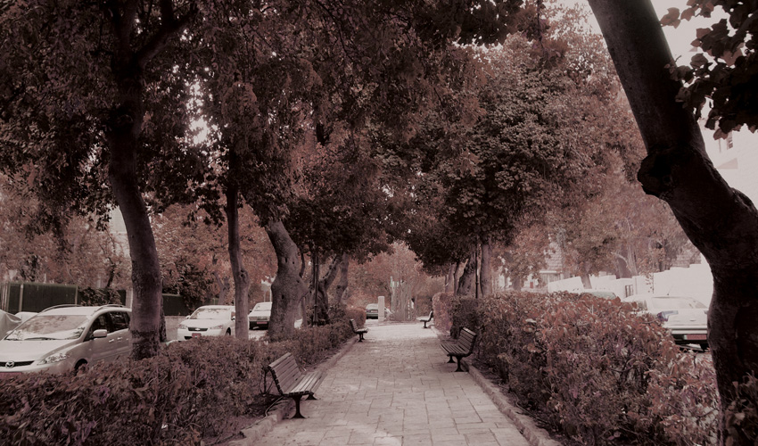 רחביה (צילום: טס שפלן)