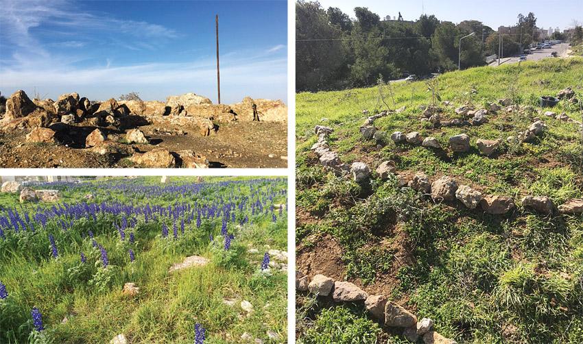 אתר הטבע העירוני 'מיצפה-טל' (צילומים: גיל שכטר ורייצ'ל שטרסמן ברקוביץ')