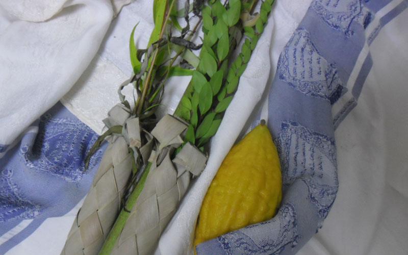 ארבעת המינים (צילום: כיכר השבת, מתוך ויקיפדיה)
