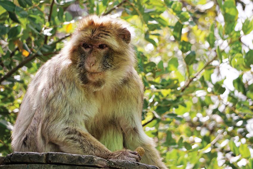 מקלט הקופים ביער בן שמן צילום: צוות פארק הקופים)