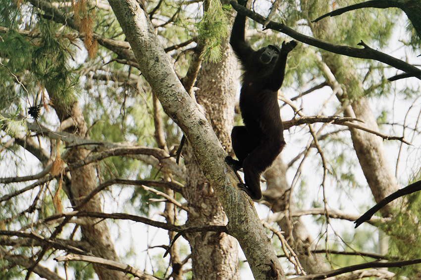 מקלט הקופים ביער בן שמן (צילום: צוות פארק הקופים)
