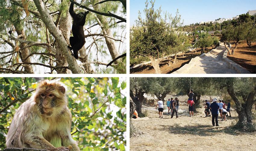 גן לאומי עמק צורים, מקלט הקופים ביער בן שמן (צילומים: יעקב שקולניק, ישי כהן, השומר החדש, צוות פארק הקופים)