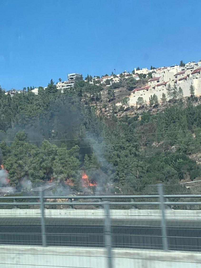 השריפה בוואדי סמוך למבשרת ציון (צילום: מעיין סבאג)