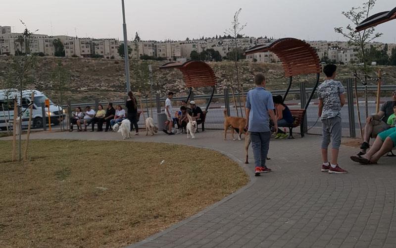 מתחם לשחרור כלבים בגן בפסגת זאב אתר- צילום מחלקת הגננות והנוף בעיריית ירושלים