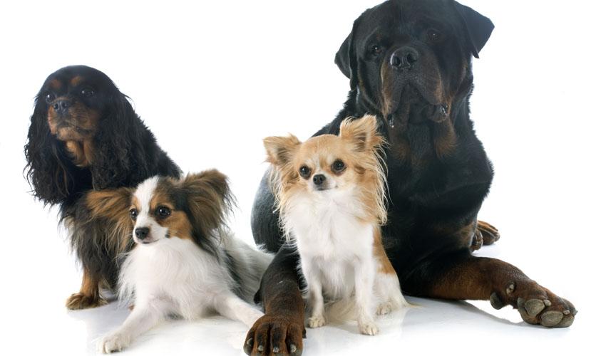 פנסיון כלבים אילוסטרציה (צילום: א.ס.א.פ קריאייטיב INGIMAGE) 