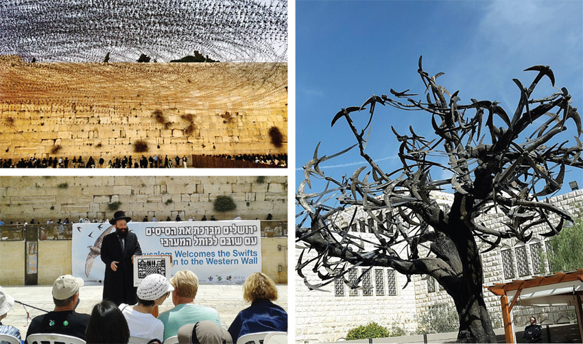 אתרים נסתרים בירושלים: מושבת הסיסים בכותל המערבי