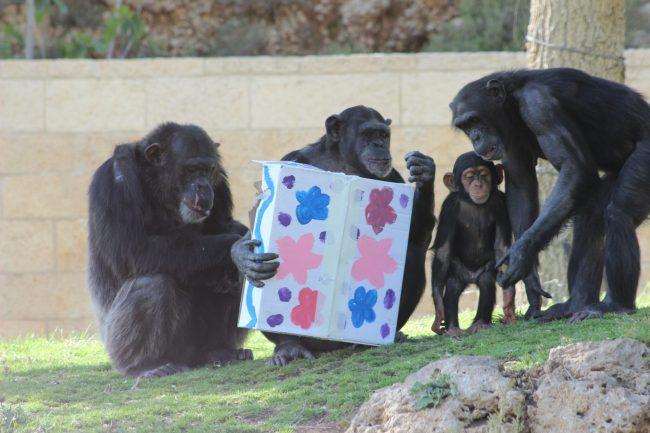 """חנוכה בגן החיות התנ""""כי (צילום: שי בן עמי)"""