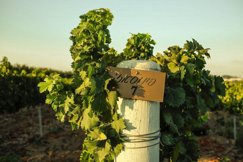 יקבים במרכז הארץ שמציעים טעימות יין