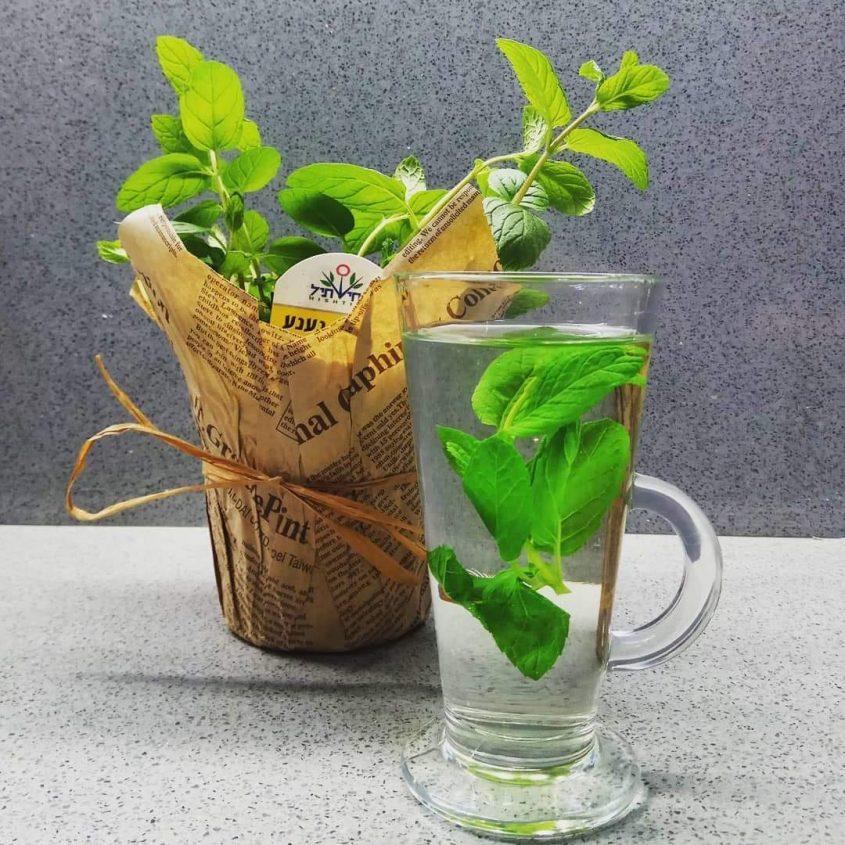 בכל זאת קר בחוץ - תשתו תה מרגיע (צילום: מיכל פישמן-רואה)