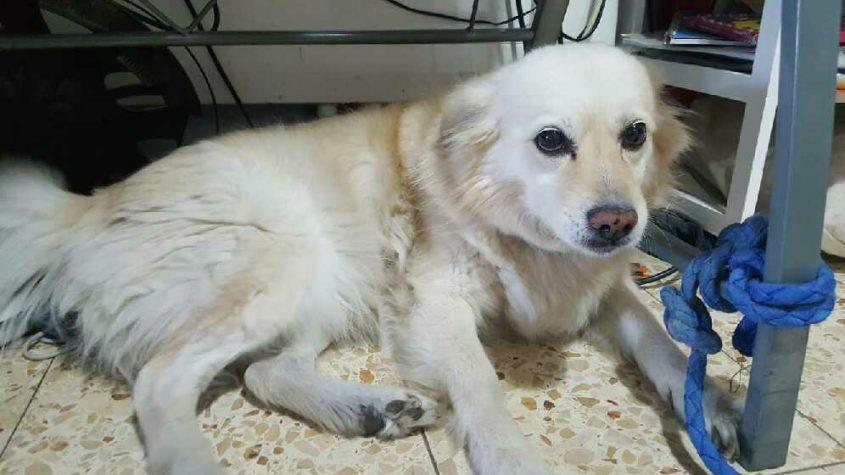 הכלבה מימי (צילום: פרטי)