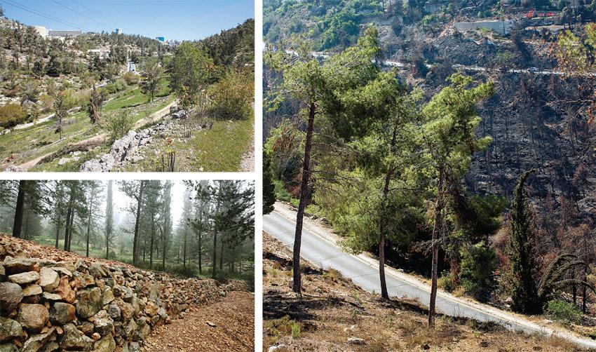 """יער ירושלים (צילומים: אוליביה פיטוסי, אמיל סלמן, יוסי זמיר, ארכיון הצילומים של קק""""ל)"""