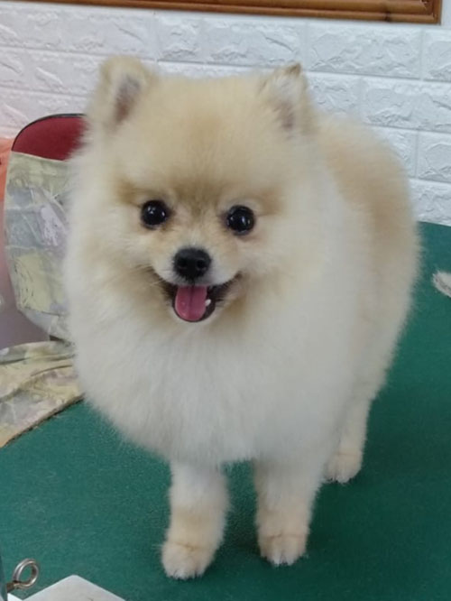 סלון יופי לכלבים אנה בריינין (צילום: פרטי)