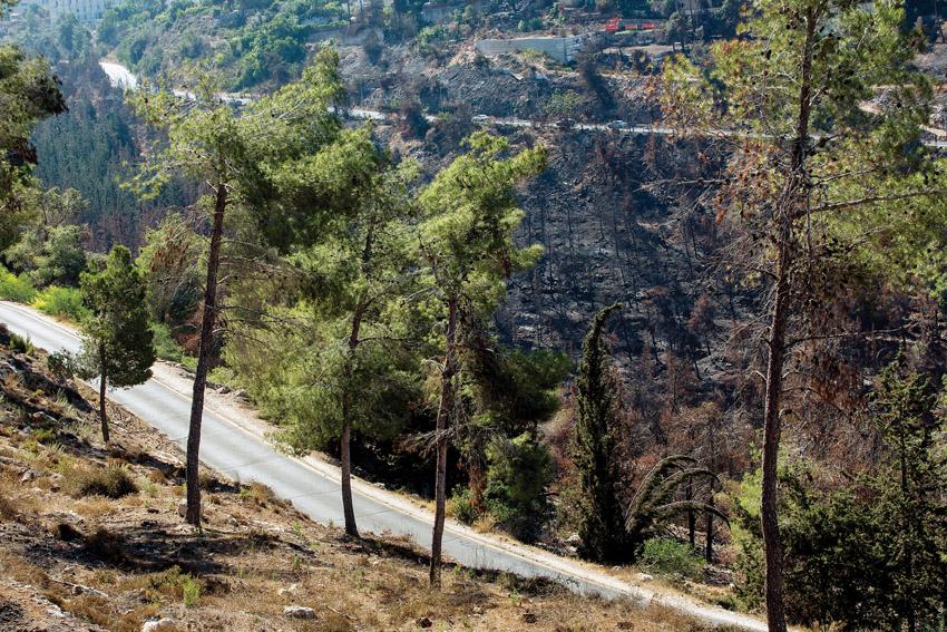 יער ירושלים (צילום: אוליביה פיטוסי)