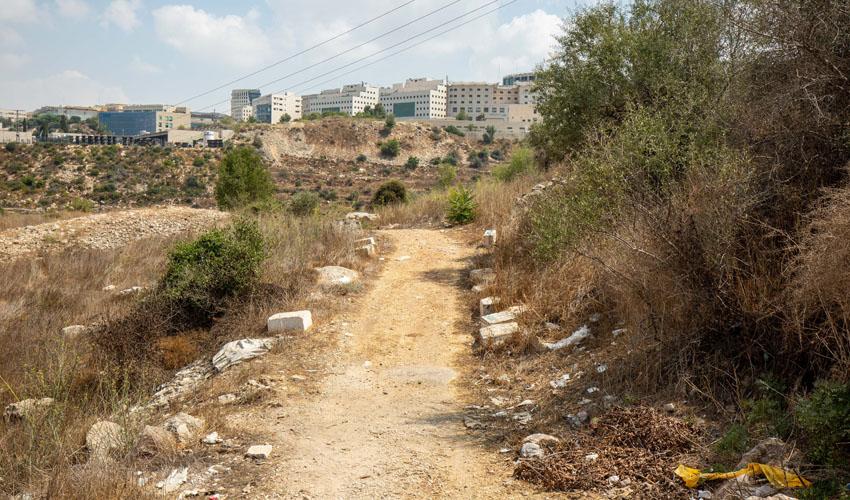 יער ירושלים (צילום: אמיל סלמן)