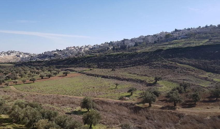 עמק הזיתים - השטח שבו מתוכננים להיבנות מגרשי הכדורגל בצפון העיר (צילומים: ישעיהו סירקיס)