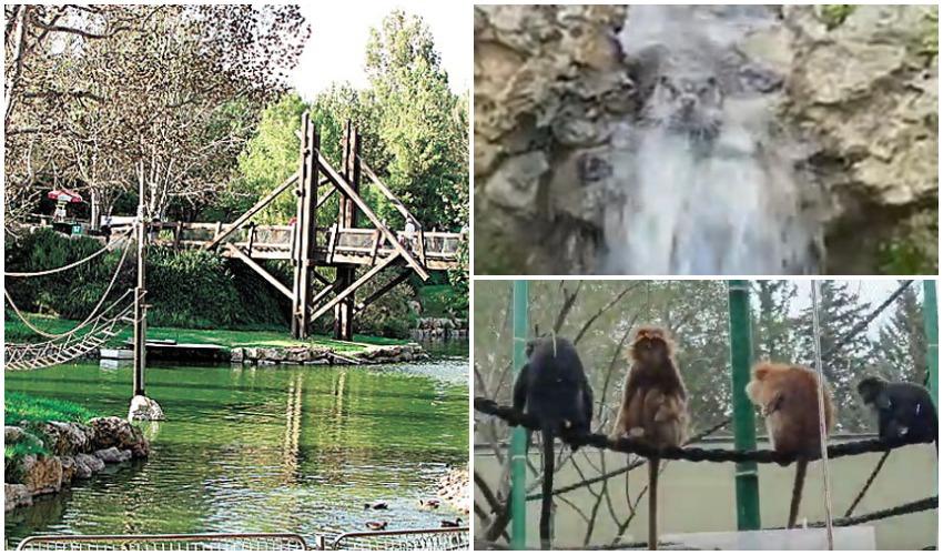 """גן החיות התנ""""כי, לוטרה, לנגורים (צילומים: Yoninah, פרטי, אוריאל נורי ויהל פרץ)"""