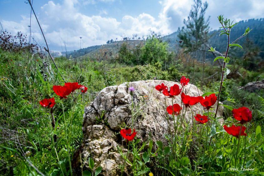 לשימוש חד פעמי עבור כתבת טבע ירושלמי בזמן הקורונה- טבע ירושלמי בזמן הקורונה (צילום: אורטל צבר)
