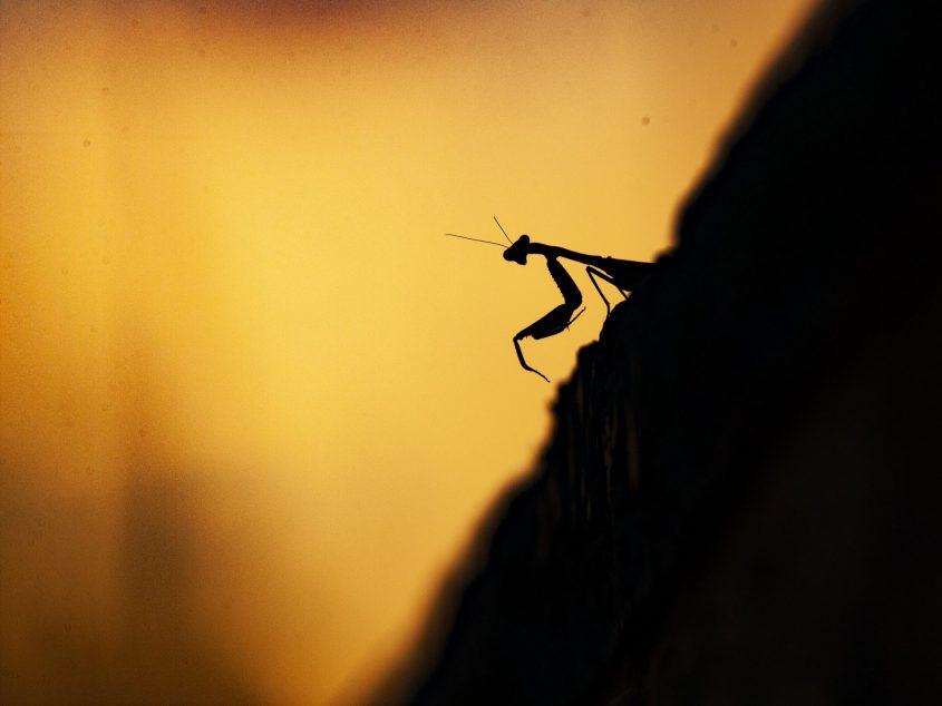 לשימוש חד פעמי בלבד - תמונת לסיפור 'יצחק עושה שלום' - גמל שלמה בהר הרצל (צילום: ארז עמיר)