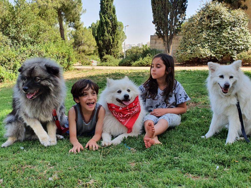 במגע של כלב, טיפול בכלבים (צילום: נועה דנסקי מרטין)