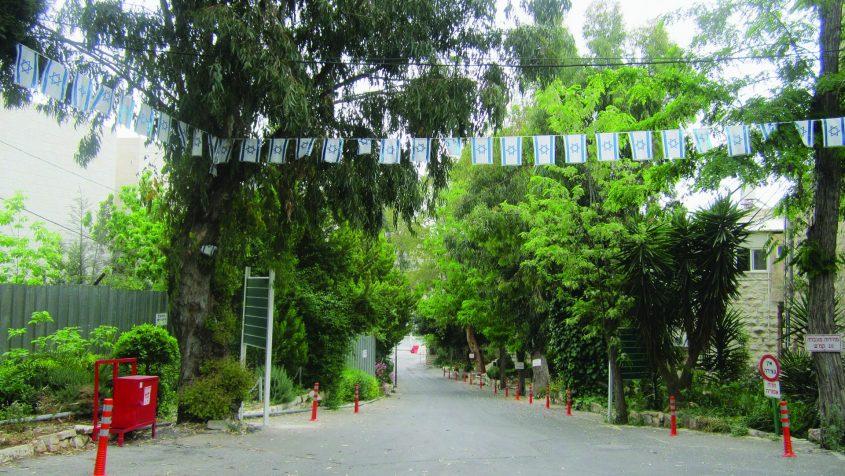 """דיר יאסין, שדרת הכניסה (צילום: ד""""ר אדם אקרמן)"""