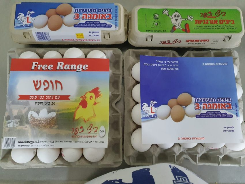 ס.א.ל ביצים (צילום: באדיבות ס.א.ל ביצים)