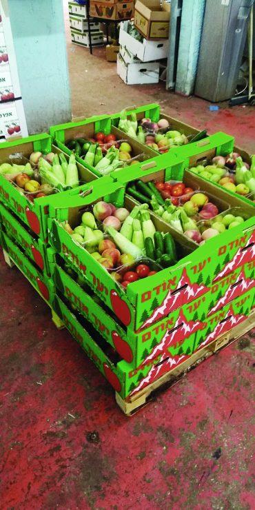 סלי מזון (צילום: עמותת תכלית)