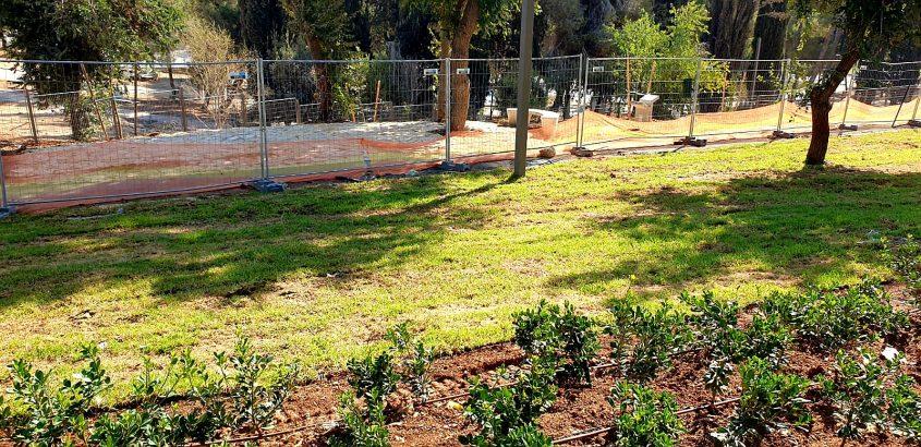 פארק הכלבים החדש בגן סאקר (צילום: מינהל קהילתי לב העיר)
