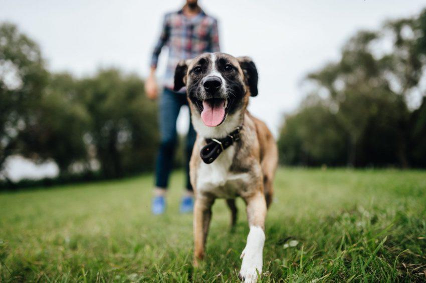 ביטוח לכלב (צילום: shutterstock)