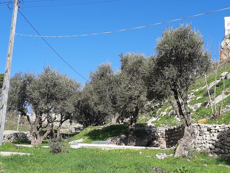"""חלקת הקבר שבו טמון רבי עובדיה מברטנורא בהר הזיתים (צילום: ד""""ר אדם אקרמן)"""