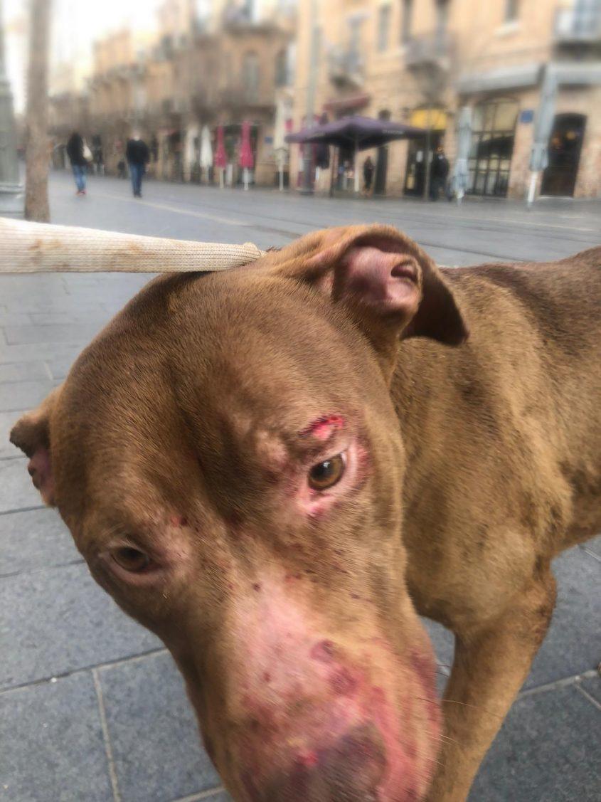 הכלב (צילום: דוברות המשטרה)