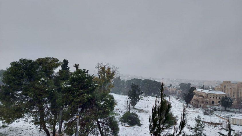 ארנונה בשלג (צילום: יפעת ראובן)