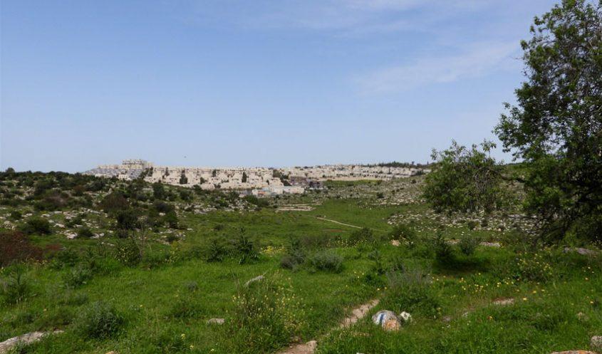 הגבעות הדרומיות, סמוך למודיעין (צילום: דב גרינבלט, החברה להגנת הטבע)
