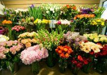 פיונה– חנות פרחים בירושלים (צילום: shutterstock.com)