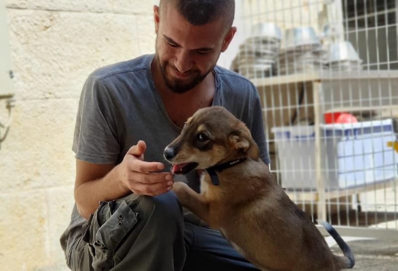 הגברת אכיפה כנגד בעלי כלבים (צילום: השירות הווטרינרי עיריית ירושלים)