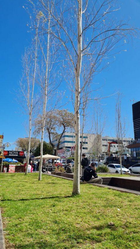 שיפור המרחב הציבורי בתלפיות (צילום: סיגל קליין)